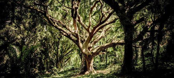 Parallel Timelines & The Tree of the Knowledge of Good and Evil