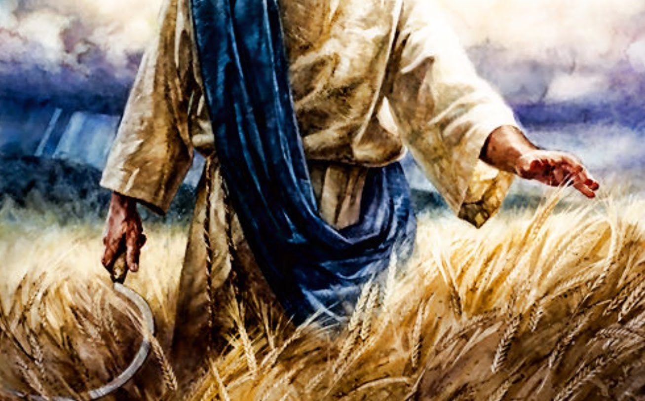 The Two Harvests of Revelation